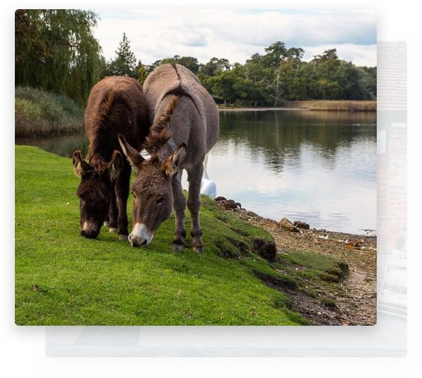 Donkeys grazing on grass near Belle & Blossom, florist New Forest.